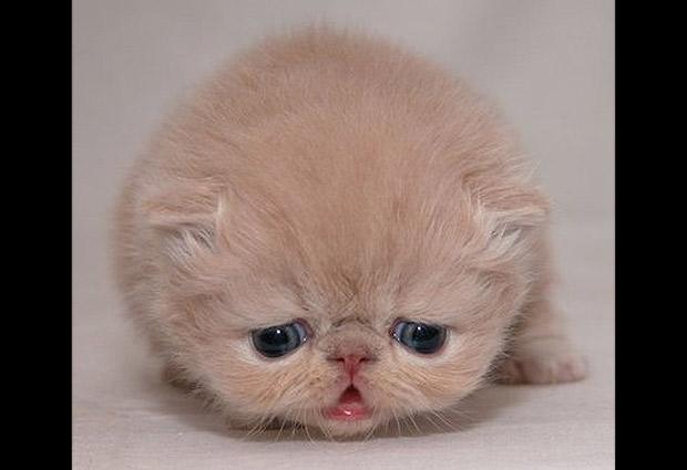 Animales tristes