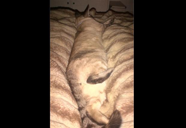 Gatos camuflados