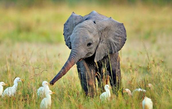 Los animales bebes m s tiernos fotograf as que te har n - Fotos de elefantes bebes ...