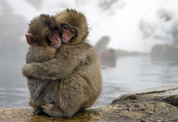 animales abrazándose