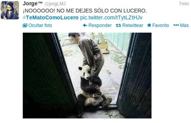 Lucero Caza Animales