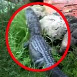 Video muestra a un caimán a solo metros de uno de los juegos de Disney