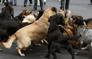 Bullying perros