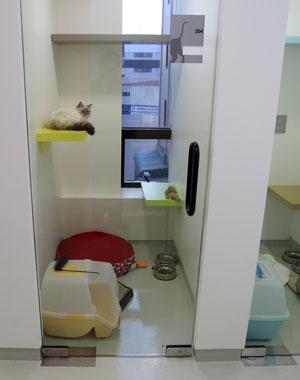 Hotel mascotas