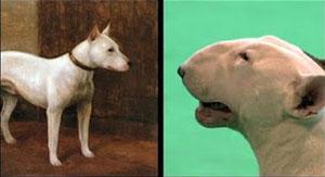 Criadores animales
