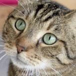 """Pacientes gatos: nunca tratarlos como """"perros chicos"""""""