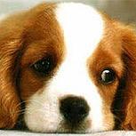 Eutanasia de mascotas, decisión terrible y resistida