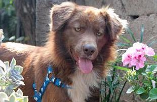 Chili dog perro adoptado turistas Estados Unidos