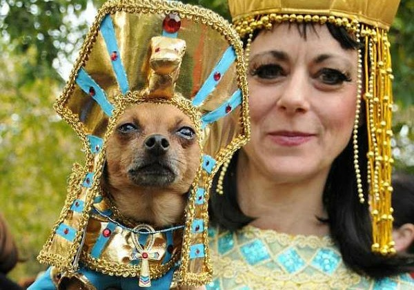 los 10 mejores disfraces de perros una selecci n imperdible