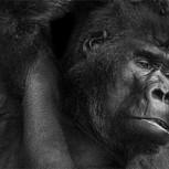 Fotografías de animales en Blanco y Negro: Maestros para posar