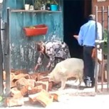 Video de perro chileno que ayuda a ancianos a entrar leña da la vuelta al mundo