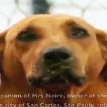 Lilica, la perra que recorre todos los días 7 kms para dar la mayor lección de generosidad