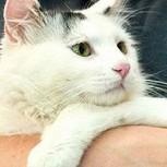 Huru: La increíble historia el gato que se salvó de los carniceros gracias a una foto