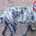 10 perros que estuvieron ante la cámara en el momento justo con insuperables resultados