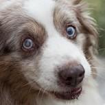 14 perros que buscan desesperadamente que les des tu atención: ¿Quién puede resistirse?