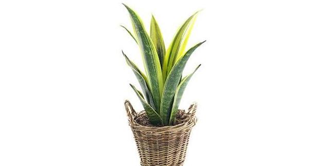 Nasa 5 plantas para purificar el aire en tu casa medio ambiente - Humidificar el ambiente ...