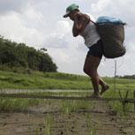 Cumbre Rio +20, los grandes desafíos en materia ambiental