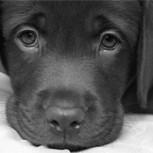 Guantes hechos con la piel de perros torturados: Crueldad extrema en China