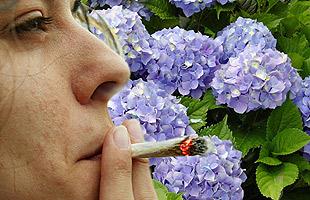Fumar Hortensias