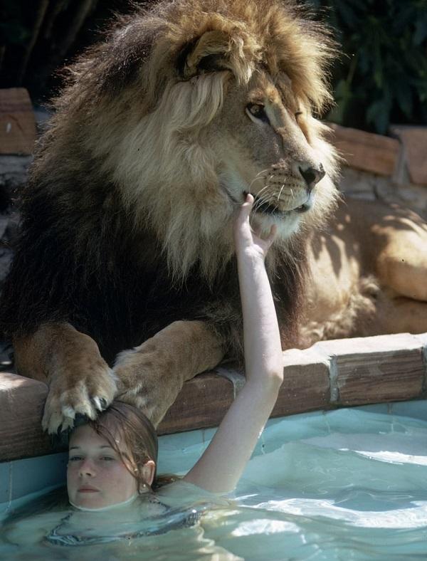 melanie griffith viviendo con leones