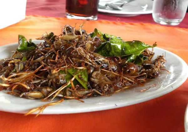 Crickets on a Stick, Brochette de grillos