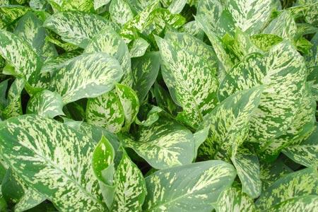 5 plantas venenosas que bien podr as tener en tu casa sin
