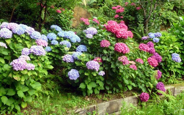 5 plantas venenosas que bien podr as tener en tu casa sin for Plantas ornamentales mas comunes