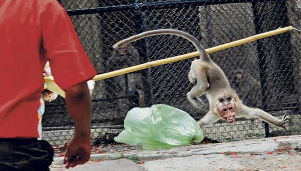 Ataque mono