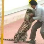 Leopardo que hirió a seis personas en India se escapa del zoológico