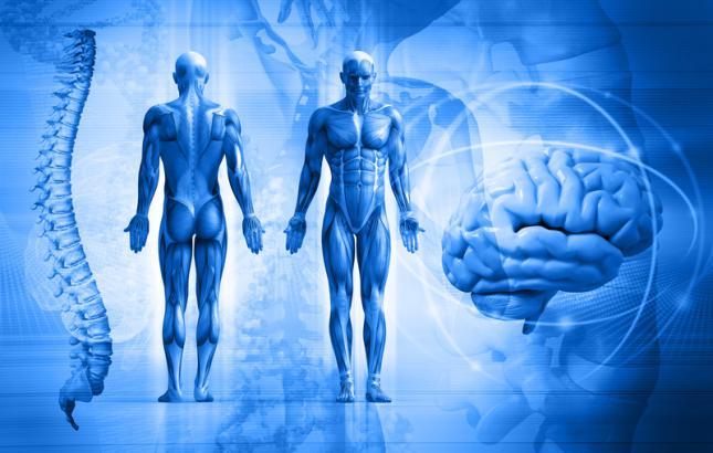 15 datos sorprendentes sobre el cuerpo humano: ¿Orejas que nunca ...