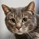 El increíble poder paranormal de los gatos: ¿predicen sucesos y sanan personas?