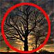 """La terrorífica historia del """"árbol del diablo"""" de New Jersey"""