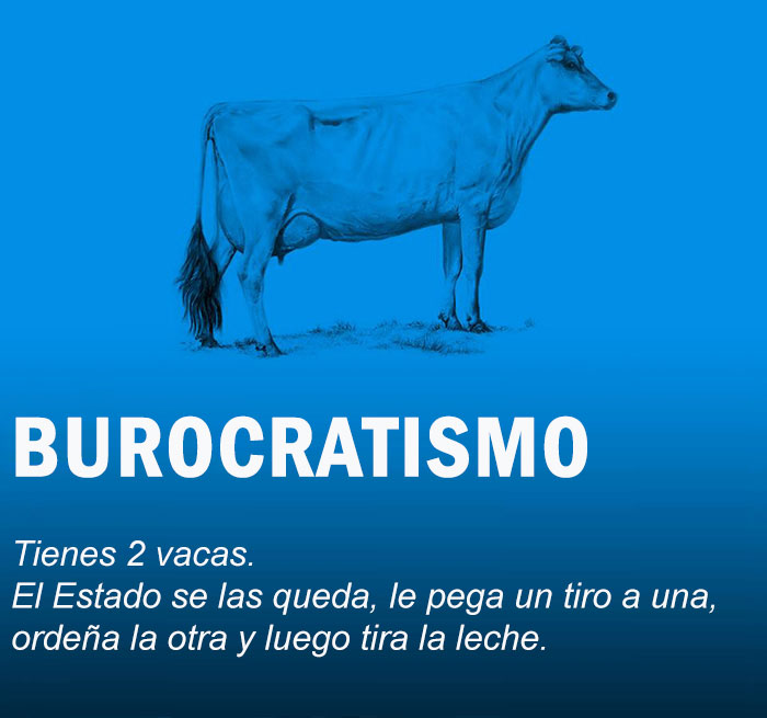 vacas10