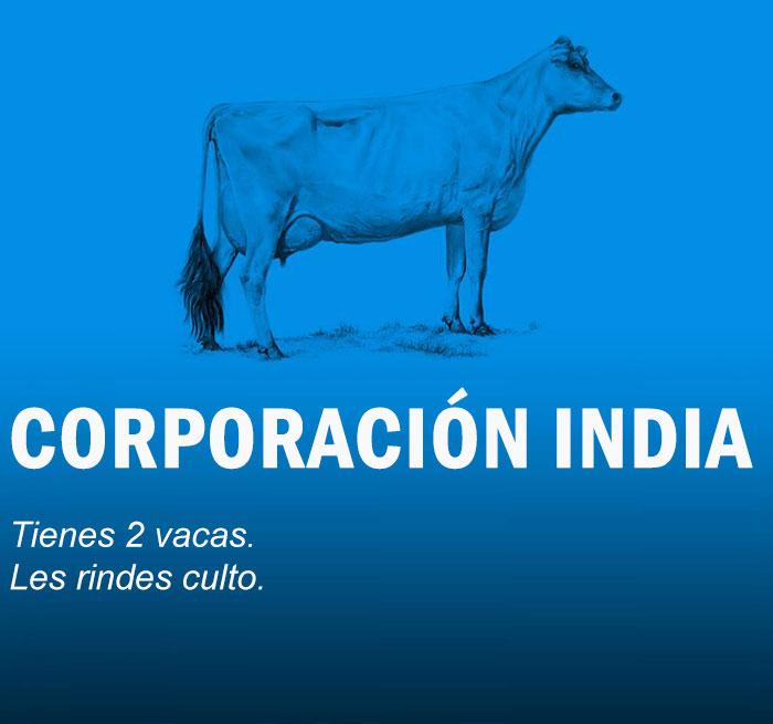 vacas12