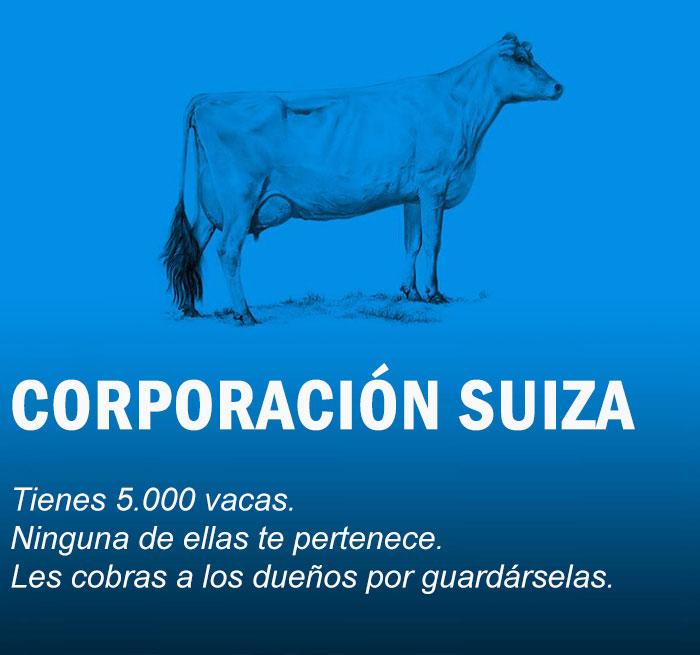 vacas14