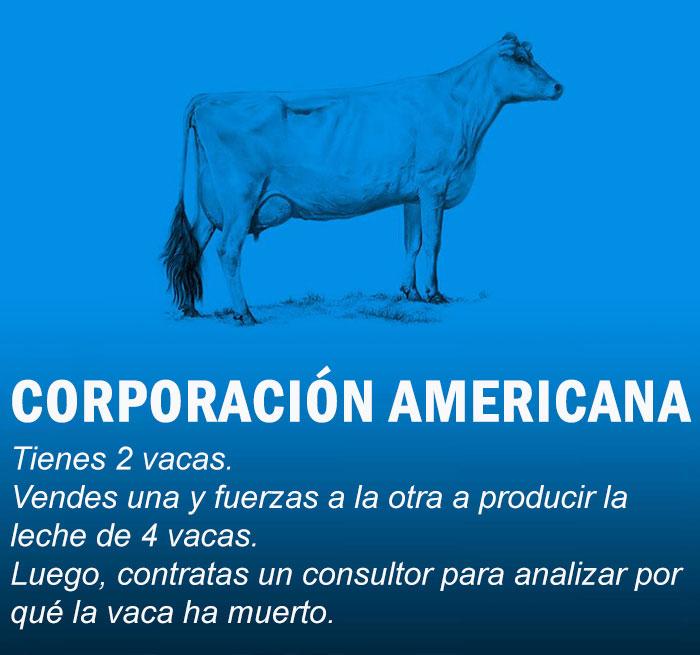 vacas4