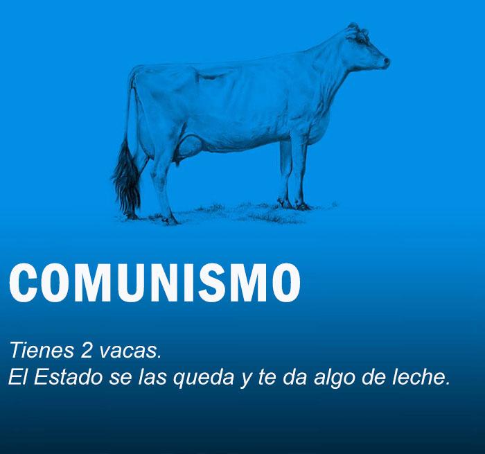 vacas6