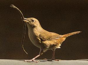 fotografiar aves