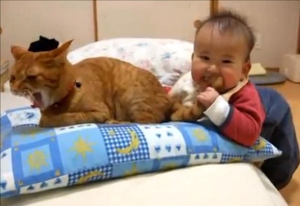 Bebés Mascotas