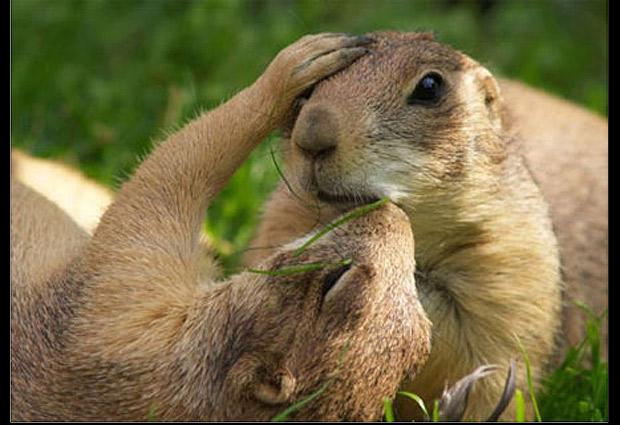 Besos de animales: 10 tiernas imágenes muestran su amor   Fotografía