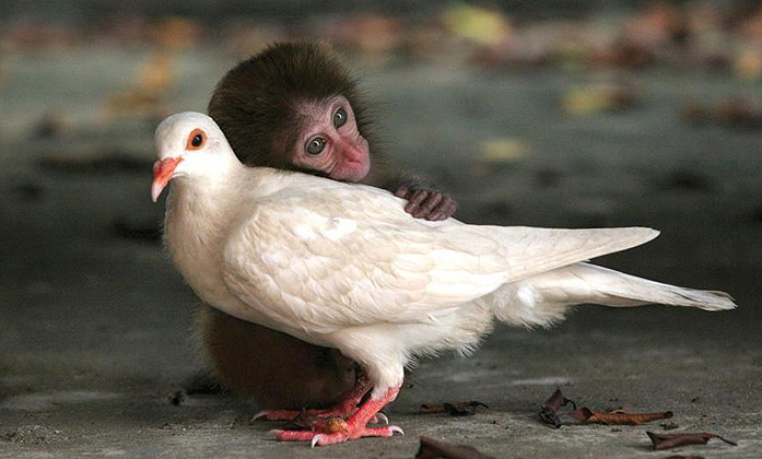 Amistad Animales Distintas Especies