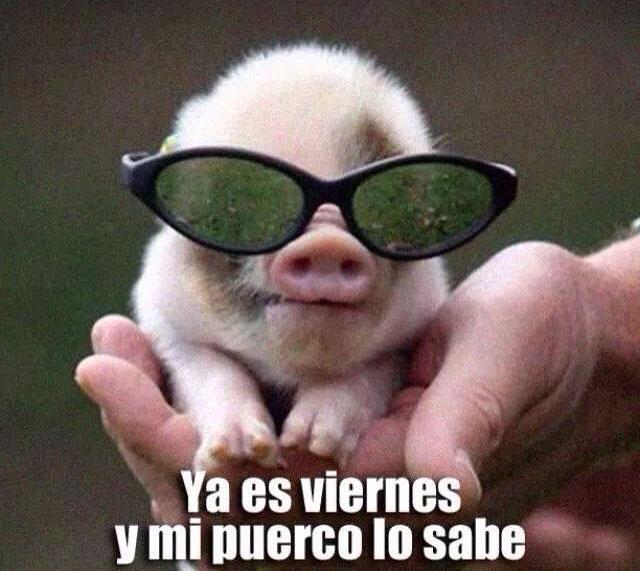 Memes Día Viernes El Humor Dedicado Al Mejor Día De La Semana