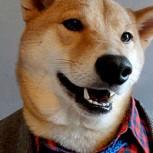 Bodhi, fotos del exclusivo perro que modela ropa de lujo para hombres