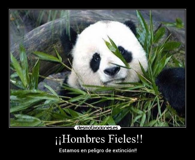 hombres fieles 12
