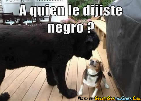 memes animales 7