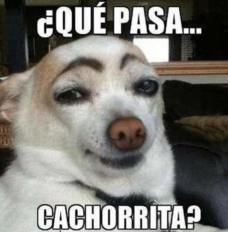 memes de perros 1 15 graciosos y tiernos memes de perros, el mejor amigo del hombre