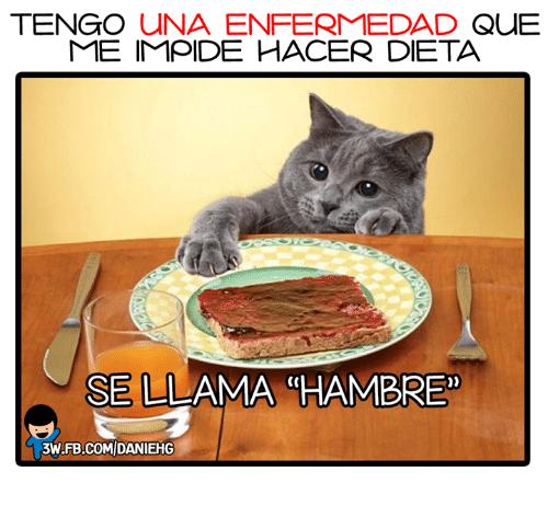 15 Memes De Dietas El Humor Para Enfrentar La Dificil Tarea De