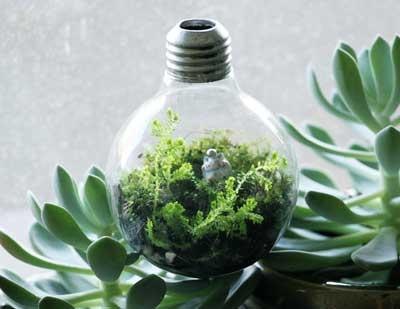 Terrarios un pedacito del jard n en una ampolleta for Bordillos de plastico para jardin