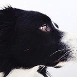¿Puedes encontrar al perro en estas fotos? El nuevo Wally