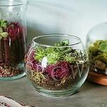 Ideas para hacer un terrarium: Naturaleza a pequeña escala en menos de una hora